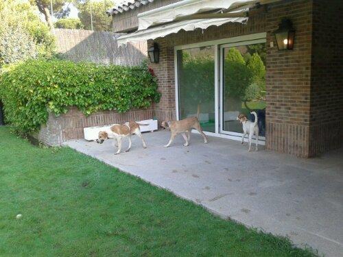 Casa de acogida paula os cuida educadora y cuidadora de perros - Casa de acogida ...