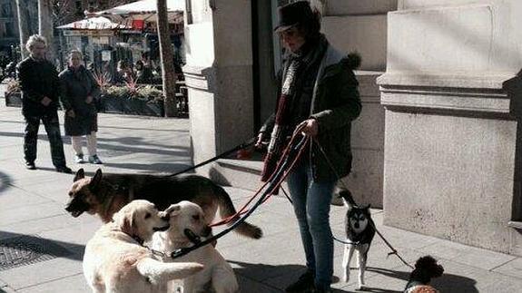 pasea-perros--575x323